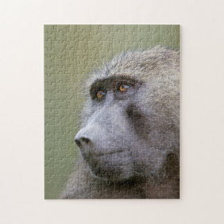 Portrait of adult Olive baboon (Papio anubis) Jigsaw Puzzle