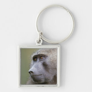 Portrait of adult Olive baboon (Papio anubis) Key Ring