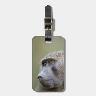 Portrait of adult Olive baboon (Papio anubis) Luggage Tag
