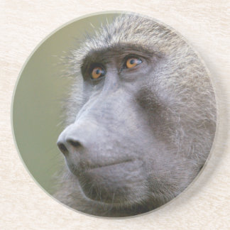 Portrait of adult Olive baboon (Papio anubis) Sandstone Coaster