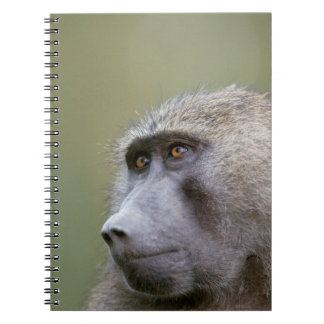 Portrait of adult Olive baboon (Papio anubis) Spiral Notebook