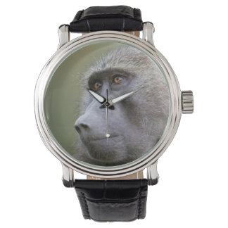 Portrait of adult Olive baboon (Papio anubis) Wristwatches
