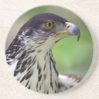 Portrait Of African Hawk Eagle Coaster