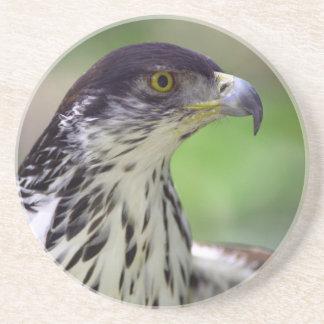 Portrait Of African Hawk Eagle Drink Coaster