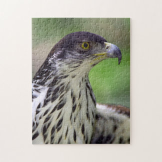 Portrait Of African Hawk Eagle Jigsaw Puzzle