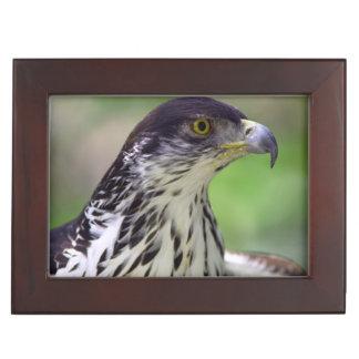 Portrait Of African Hawk Eagle Keepsake Box