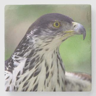 Portrait Of African Hawk Eagle Stone Beverage Coaster