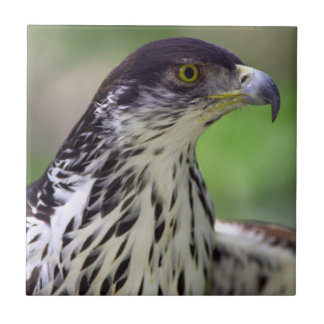 Portrait Of African Hawk Eagle Tile