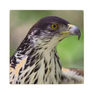 Portrait Of African Hawk Eagle Wood Coaster