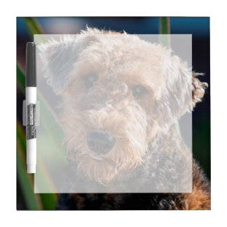 Portrait of an Airedale Terrier 1 Dry-Erase Whiteboard