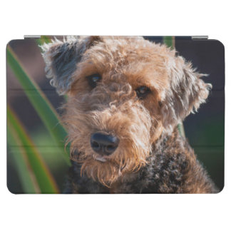 Portrait of an Airedale Terrier 1 iPad Air Cover