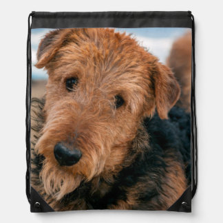 Portrait of an Airedale Terrier 2 Drawstring Bag