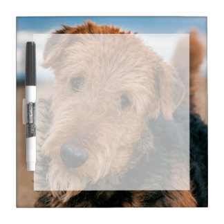 Portrait of an Airedale Terrier 2 Dry Erase Board