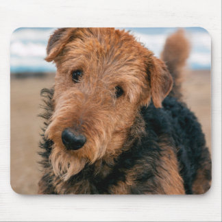 Portrait of an Airedale Terrier 2 Mouse Mat