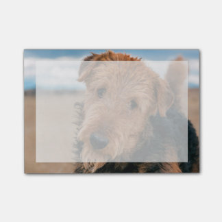 Portrait of an Airedale Terrier 2 Post-it Notes