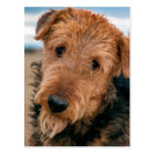 Portrait of an Airedale Terrier 2 Postcard