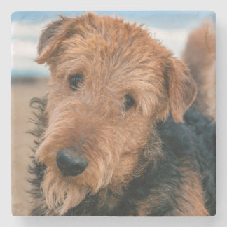 Portrait of an Airedale Terrier 2 Stone Beverage Coaster