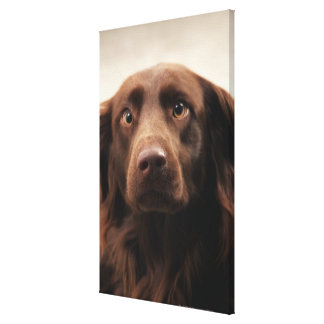 Portrait of an apprehensive young female gallery wrap canvas