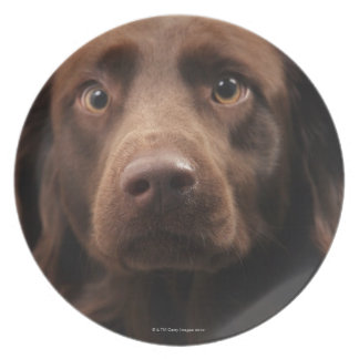Portrait of an apprehensive young female plate