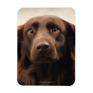 Portrait of an apprehensive young female rectangular photo magnet