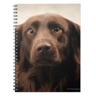 Portrait of an apprehensive young female spiral notebook
