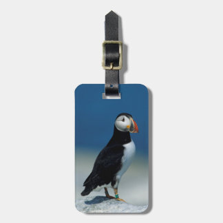 Portrait of an Atlantic Puffin Luggage Tag