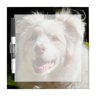 Portrait of an Australian Shepherd Dry Erase Whiteboards