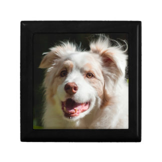Portrait of an Australian Shepherd Gift Box