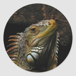 Portrait of an Iguana Classic Round Sticker