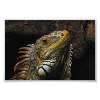 Portrait of an Iguana Photo Print