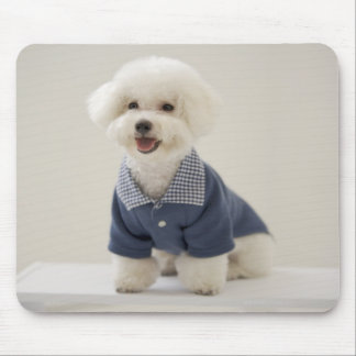 Portrait of Bichon Frise standing on table Mouse Pad