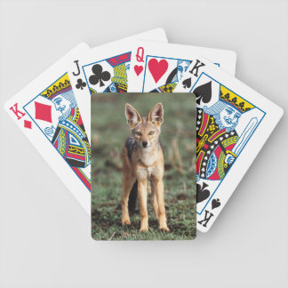 Portrait of Black-Backed Jackal Bicycle Playing Cards