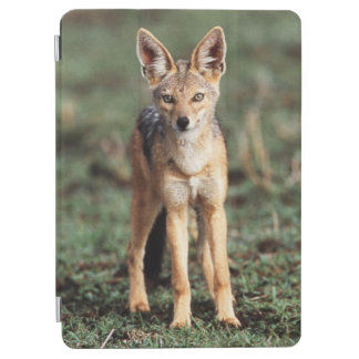 Portrait of Black-Backed Jackal iPad Air Cover