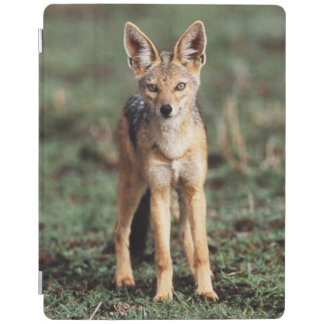 Portrait of Black-Backed Jackal iPad Cover