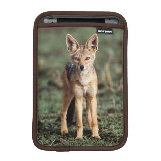 Portrait of Black-Backed Jackal iPad Mini Sleeve