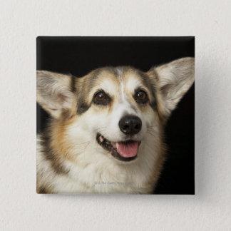 Portrait of black, brown and white Corgi 15 Cm Square Badge