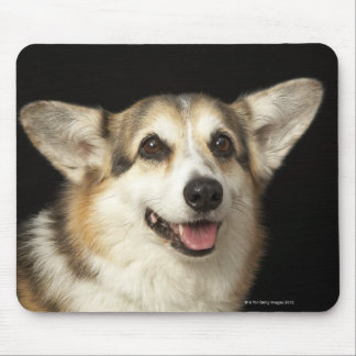 Portrait of black, brown and white Corgi Mouse Mat