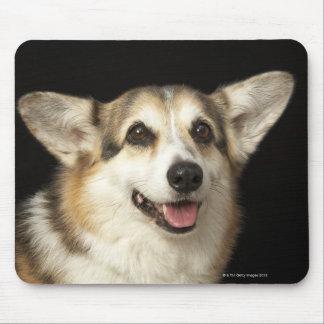 Portrait of black, brown and white Corgi Mouse Pad