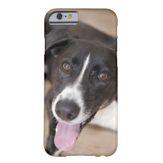 portrait of black dog barely there iPhone 6 case