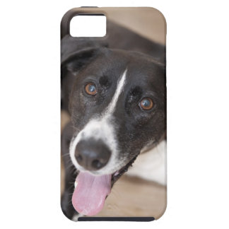 portrait of black dog case for the iPhone 5