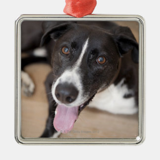 portrait of black dog christmas ornament
