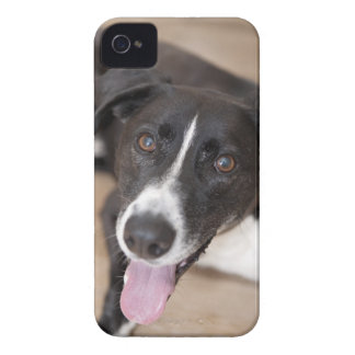 portrait of black dog iPhone 4 case