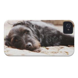 portrait of black dog lying in yard iPhone 4 case
