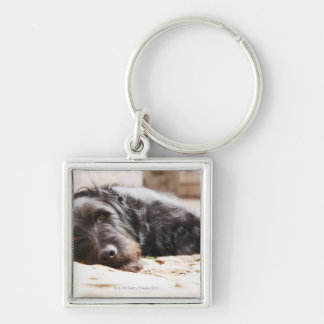 portrait of black dog lying in yard Silver-Colored square key ring