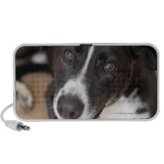 portrait of black dog laptop speakers