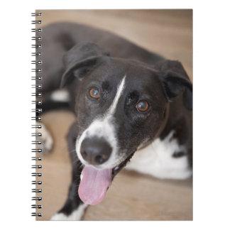 portrait of black dog spiral notebook