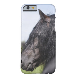 portrait of black horse with long mane barely there iPhone 6 case