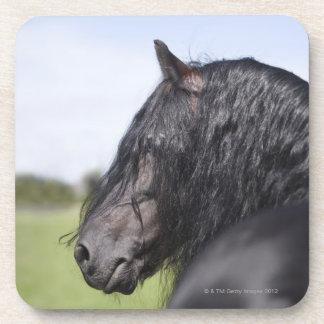 portrait of black horse with long mane beverage coasters