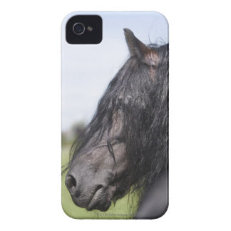 portrait of black horse with long mane iPhone 4 cases