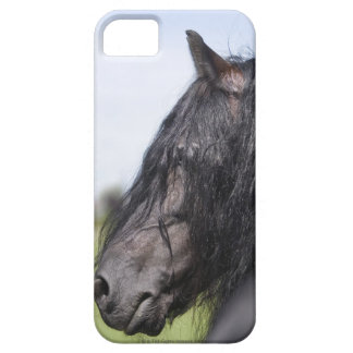 portrait of black horse with long mane iPhone 5 cases